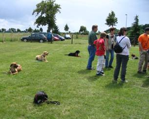 Hundeschule A-Z Junghunde Training